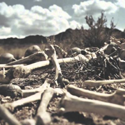 dry bones website